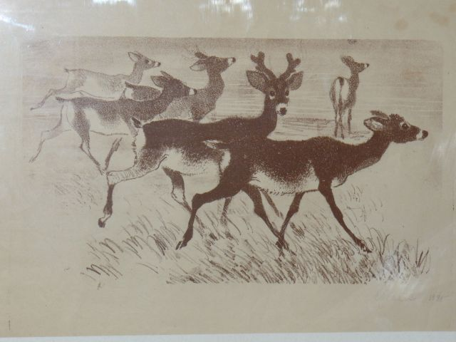 Deer (lithograph)
